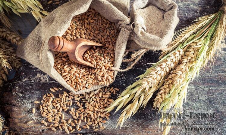 Oats Grains For Sale