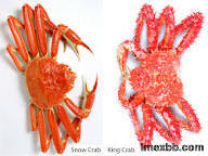 Live and frozen king crab, snow crab, spanner crab, king crab leg, clusters