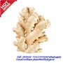 Wholesale Fresh Ginger