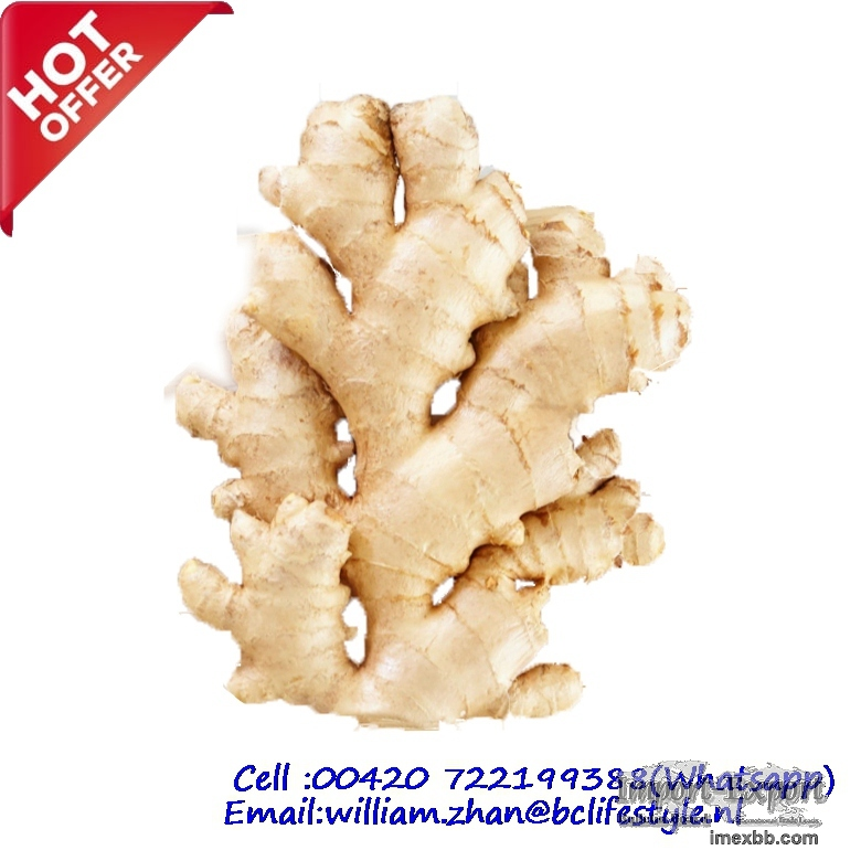 Wholesale Fresh Ginger