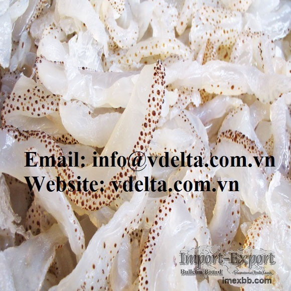 Salted Jelly Fish - Vietnam 2016 fish season - competitive price and qualit