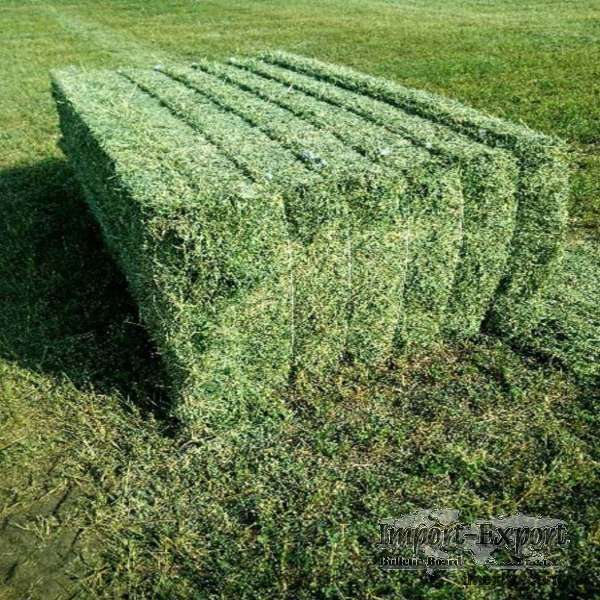 High Quality Alfalfa Hay For Animal Feed for Sale