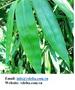 Hard / Soft Tropical Seasonal Dry Fruit from Vietnam