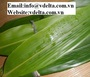 BAMBOO LEAVES IN VIET NAM BEST PRICE