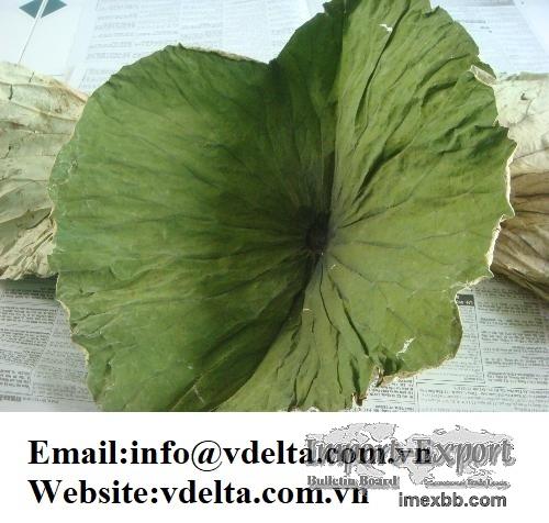 Viet Nam dried lotus leaves best price