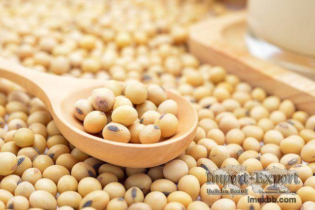 Top Quality NON GMO Dried Soybean