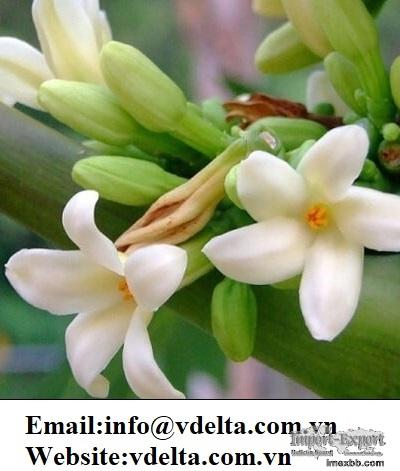 DRIED PAPAYA FLOWER BEST PRICE
