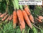 Pure Carrot Organic Frozen Carrot for Salad