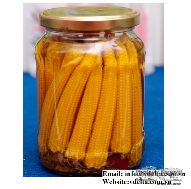 High quality Canned baby corn from VIETNAM