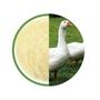 6 5 Billion Cfu Poultry Probiotics Powder Bacillus Subtilis In Animal Feed