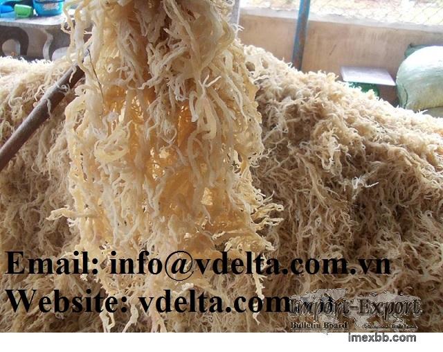 Sea Moss Irish Seaweed Eucheuma Cottoni
