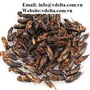 Pets food cheap dried cricket