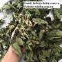 Natural dried papaya leaf from Vietnam for export standard