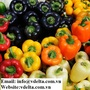 Bell sweet pepper with high quality and best price