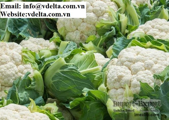 supplier of  frozen white broccoli fresh cauliflowers best price