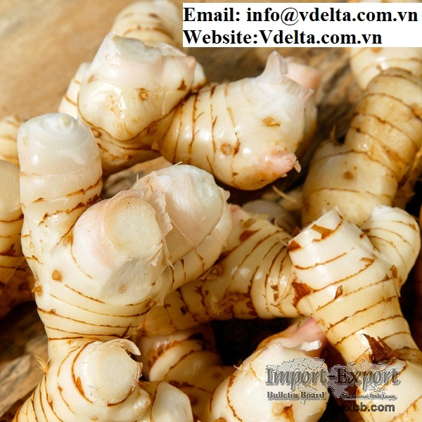 Vietnamese frozen Galangal Root With The Best Quality