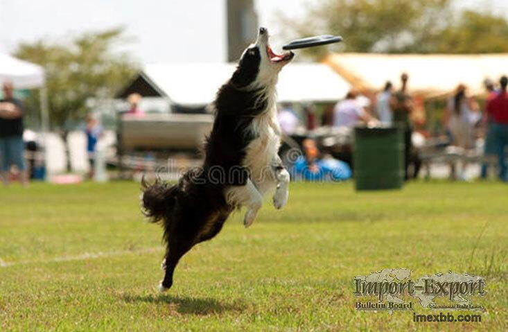 Flying Dog Toy