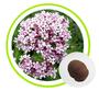Valerian Root Extract Powder Valeric Acid 10:1