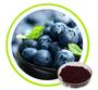 Blueberry Extract Proanthocyanidins 25%,40%,50% Anthocyanindins 5%,10%