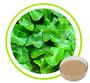 Centella Asiatica Extract 10%-95%