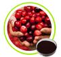 Cranberry Extract Proanthocyanidins25% 40% 50% Anthocyanidins 5% 10% PAC