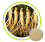 Ginseng Root Extract Ginsenosides 10% 20% 30% 50% 80%