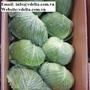 VIETNAM FRESH GREEN CABBAGE