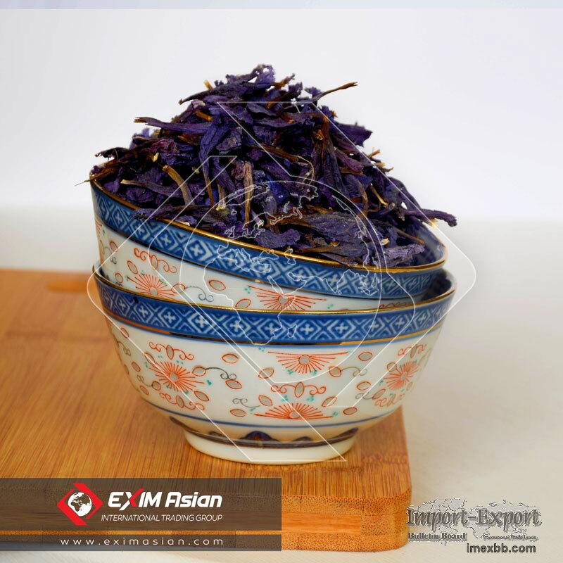 Echium Amoenum ( Persian Borage )