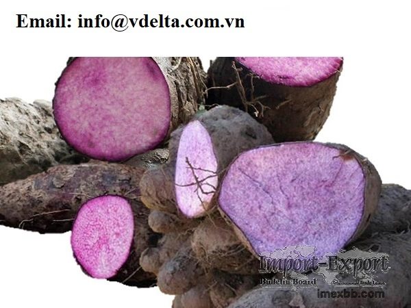 Hot Sale in Yams/ New crop in Yams from Viet Nam